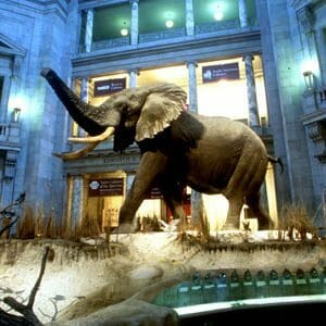 300x300 nationalmuseumnaturalhistory_rotunda