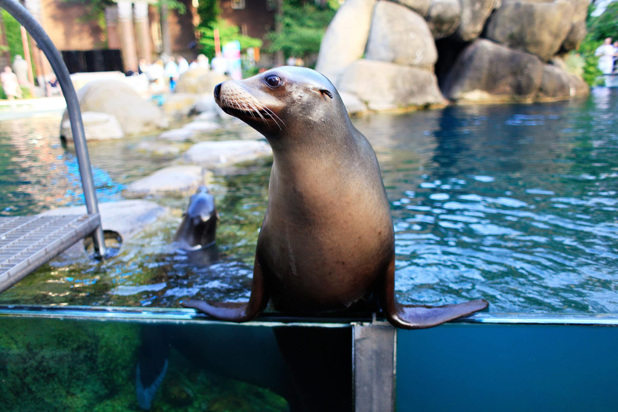 Central Park Zoo, Manhattan, Credit NYC & Company