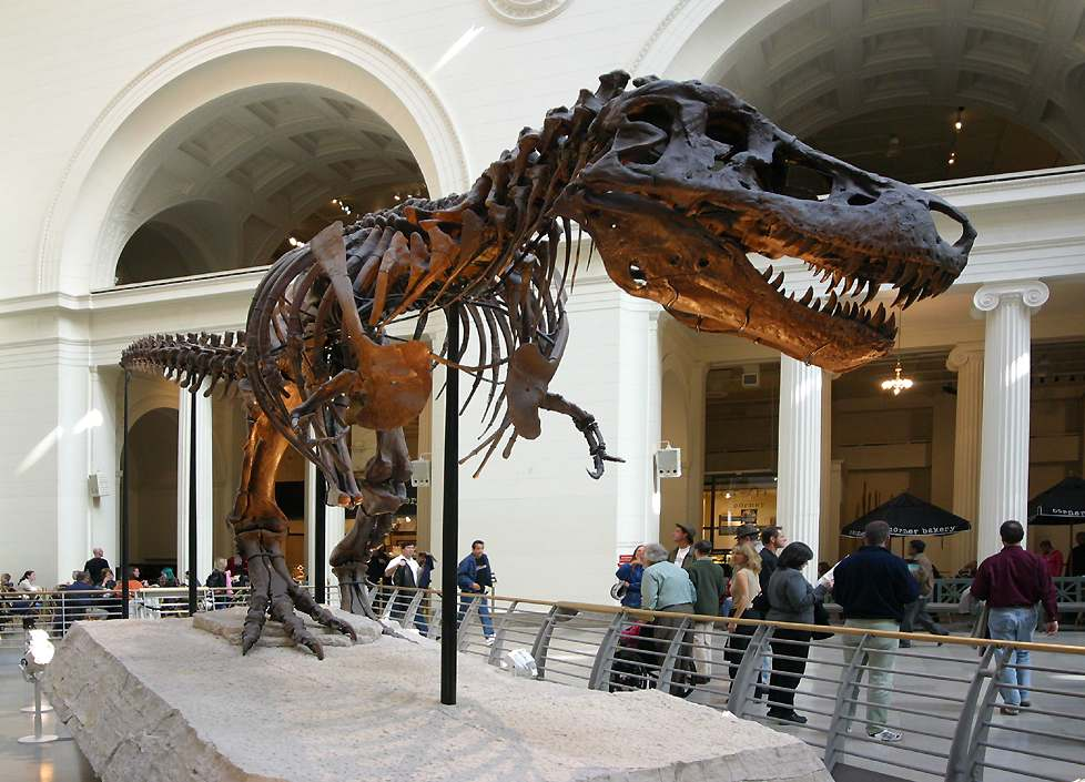 Field Museum Chicago - Sue the T Rex