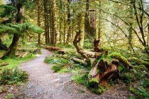 Forest Floor at Olympic National Park