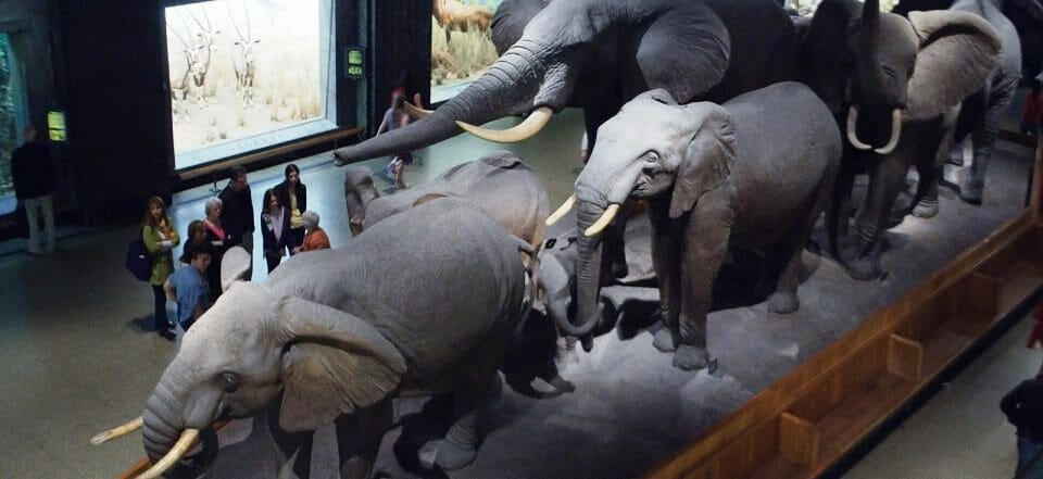 African_Hall,_American_Museum_of_Natural_History_(7171355207)