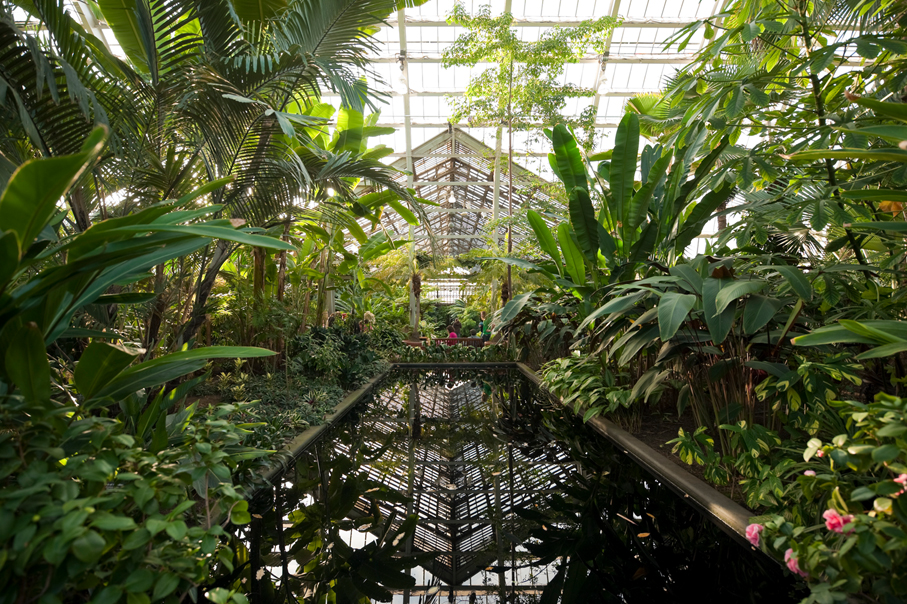 Garfield Park Conservatory Credit City of Chicago Photo COurtesy of Choose Chicago