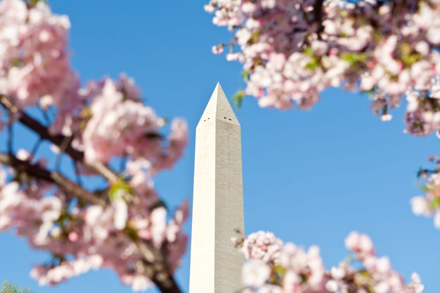 Springtime at the Washington Monument framed by pink cherry blossoms. Washington, DC, United States.